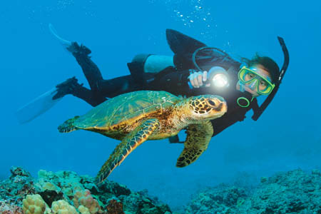 peli-4300n-nemo-diving-with-turtle.jpg
